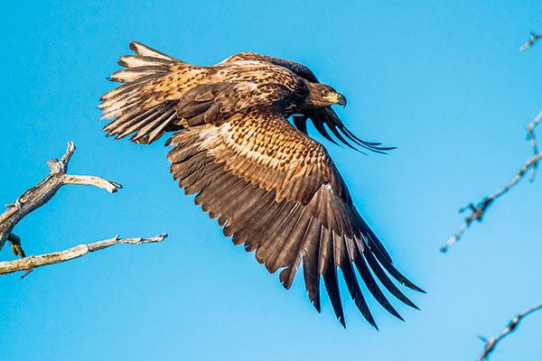 Killarney Eagles