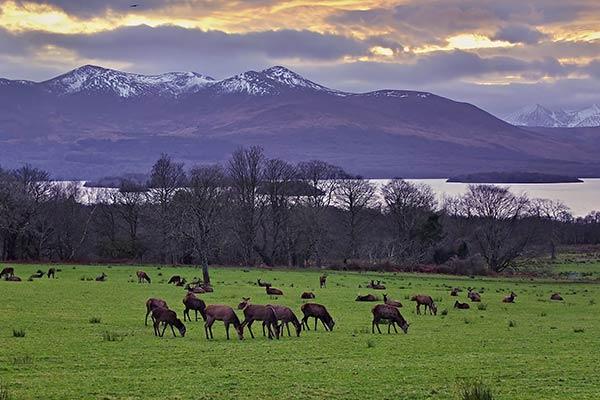 Walks Knockreer Killarney