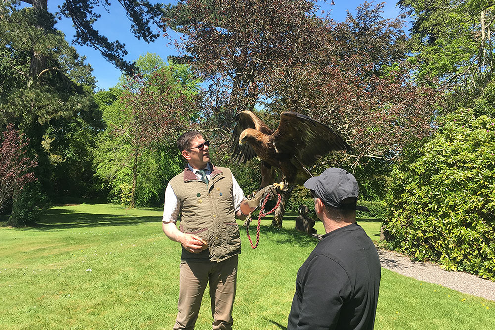 Falconry at Coolclogher