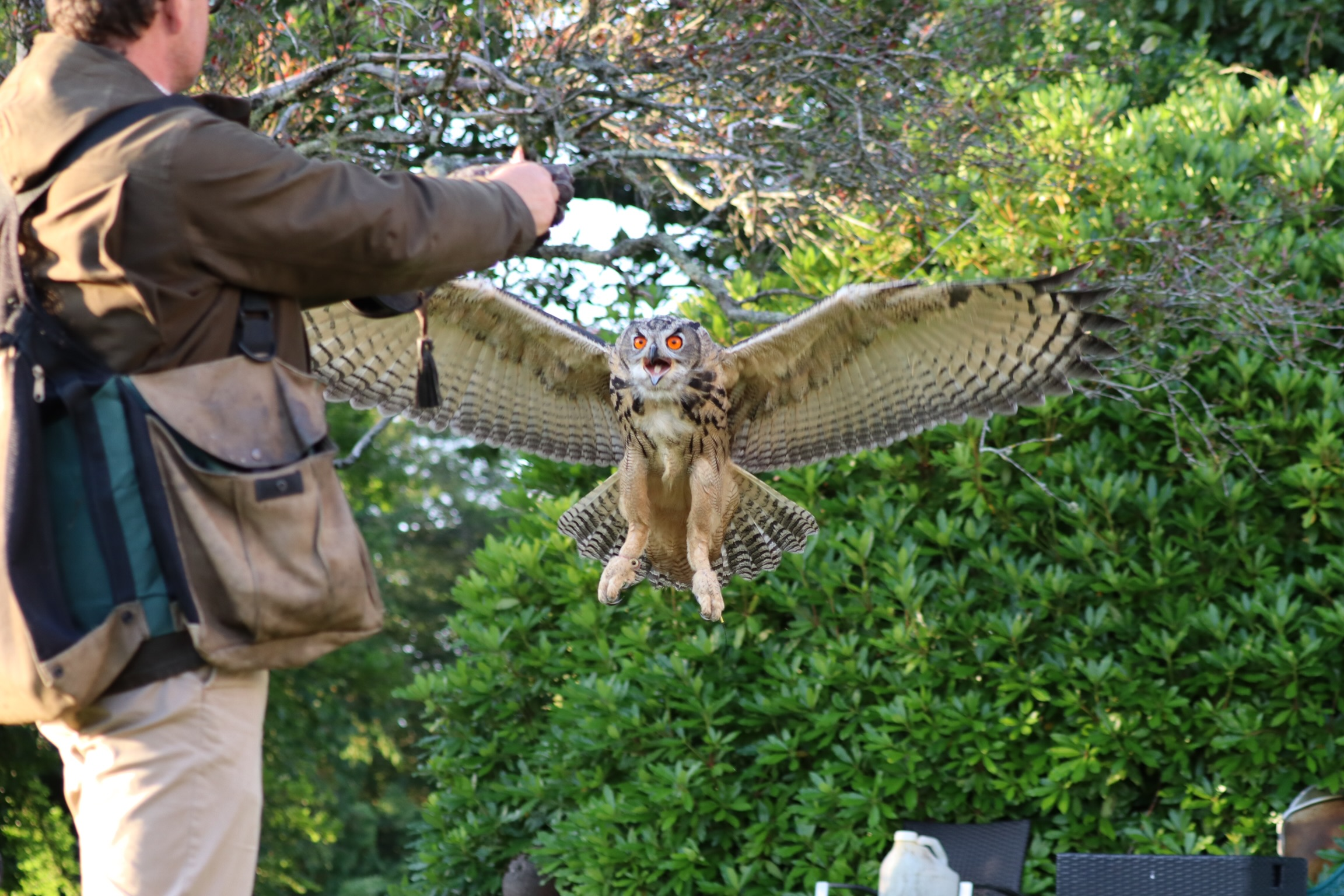 Falconry at Coolclogher House
